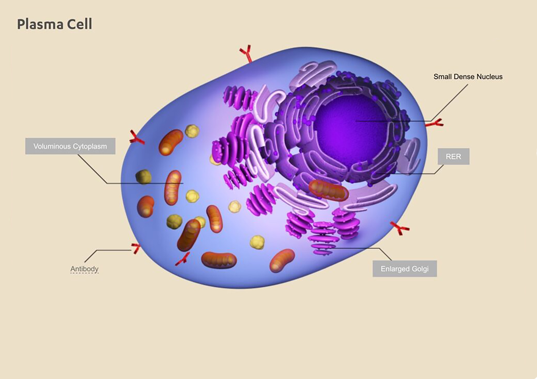 PR- elearning image plasma cell